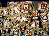 Stuffed Tiger Trophy Heads of Big Game Hunters Are Piled Up in Paul Zimmerman's Taxidermy Shop Premium Photographic Print by Loomis Dean