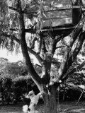 Children Playing in a Treehouse Photographic Print by Arthur Schatz