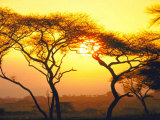 Tanganyika Thorn Trees with Brilliant Sunset in Background at Serengeti National Park Premium Photographic Print by Loomis Dean