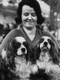 Champion Cavalier King Charles Spaniels, at Cruft's Dog Show Premium Photographic Print by Terence Spencer