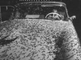 Man Driving Car Covered by Swarms of May Flies Which Invaded the Area Premium Photographic Print by Al Fenn