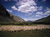 Sheep Herder Tending His Flock in the Sawtooth Mountains Premium Photographic Print by Eliot Elisofon
