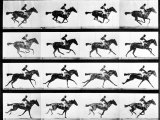 Photographer Eadweard Muybridge's Study of a Horse at Full Gallop in Collotype Print Papier Photo par Eadweard Muybridge