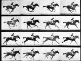 Photographer Eadweard Muybridge's Study of a Horse at Full Gallop in Collotype Print Stampa fotografica di Muybridge, Eadweard