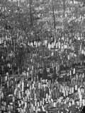 Masses of Tombstones in Cemetery in Queens Premium Photographic Print by Andreas Feininger