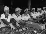 Women Packaging Bay Leaves in A&P Plant Premium Photographic Print by Herbert Gehr