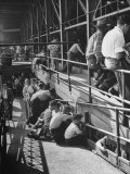 Sports Fans Attending Baseball Game at Ebbets Field Premium Photographic Print by Ed Clark