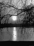 Swans Swimming Through the Moonlight Streaks on Pond Premium Photographic Print by Cornell Capa