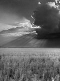 Wheat Field Photographic Print by Ed Clark