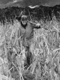 Year Off Student Working as a Farm Hand Premium Photographic Print by Bill Eppridge