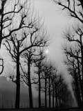 Very Foggy Mood Shot Including Chestnut Trees Premium Photographic Print by Thomas D. Mcavoy