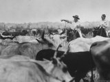 Venezuelan Cattle Industry Premium Photographic Print by Art Rickerby