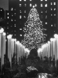 Rockefeller Center Christmas Tree at Night Photographic Print by Alfred Eisenstaedt