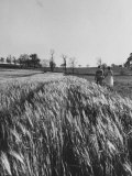 Young Couple Walking by a Grain Field Premium Photographic Print by Ed Clark