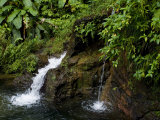 Two Small Waterfalls Flow into Fresh Water Pond in a Rain Forest Photographic Print by Todd Gipstein