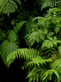 Close View of Lush Foliage in a Rain Forest Fotoprint van Todd Gipstein