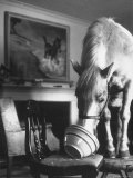 Misty of Chincoteague Wild Horse at Farewell Party Before Returning Home to Chincoteague Island Premium Photographic Print by Grey Villet