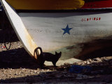 A Black Cat Stands Next to the Bow of a Painted Wooden Fishing Boat Photographic Print by Medford Taylor