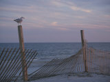 A Seagull Pauses Momentarily on a Wooden Fence Used for Dune Control Photographie par Stacy Gold