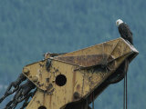 A Northern American Bald Eagle Sits Atop a Construction Vehicles Highest Point Fotografie-Druck von Norbert Rosing