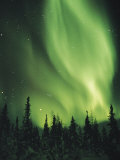 The Aurora Borealis Shimmers in the Sky Above Silhouetted Evergreeens Reprodukcja zdjęcia autor Norbert Rosing
