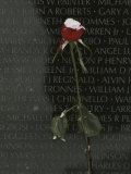 A Snow Dusted Rose Speaks of Lasting Love at a War Memorial Photographic Print by Karen Kasmauski