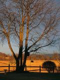 Cherry Tree in Waynesboro, Pennsylvania Photographic Print by Raymond Gehman