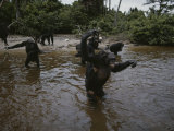 Wading in Water, Chimpanzees Aggressively Approach Visitors Photographic Print by Michael Nichols