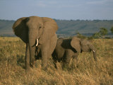 A Female Elephant with Her Baby on a Masai Mara Plain Photographic Print by Roy Toft
