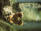 A Pet Dog Sits in the Shallow Water of a Creek Photographic Print by Bill Curtsinger