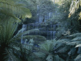 Lush Ferns Frame a Waterfall in the Park Fotografisk tryk af Sam Abell