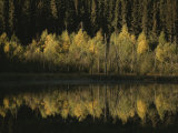 Autumnal Beauty Reflected in a Still Creek Photographic Print by Raymond Gehman