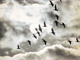 Geese in Flight Photographic Print by Emory Kristof