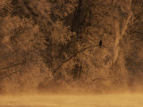 A Silhouetted Eagle Sits on a Frost-Covered Tree Branch Photographic Print by Norbert Rosing