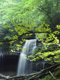 A Cascade Falls from a Rock Formation Photographic Print by Bill Curtsinger