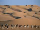 A Camel Caravan Crosses a Landscape of Sculpted Sand Dunes Photographic Print by Peter Carsten