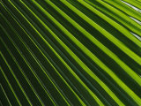 Close View of a Palm Plant Photographic Print by Nicole Duplaix