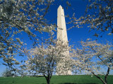 Blossoming Japanese Cherry Trees Frame a View of the Washington Monument Photographic Print by Medford Taylor