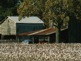 A Cotton Field Surrounds a Small Farm Photographic Print by Medford Taylor