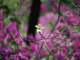 A Single Dogwood Blossom is Seen against a Colorful Background Fotografisk tryk af Stephen St. John