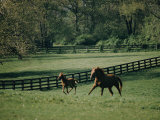 A Horse and its Colt Run Through a Field Photographic Print by Dick Durrance