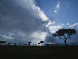 Sun Rays Break Through Clouds over Acacia Trees on an African Plain Photographic Print by Roy Toft