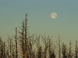 The Moon Rises Above Trees Along the Tennessee/North Carolina Border Photographic Print by George F. Mobley
