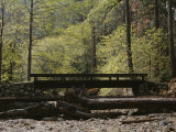 Footbridge over a Dry Stream in Yosemite Photographic Print by Marc Moritsch