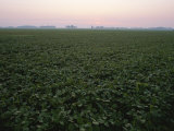 Early Morning Mist over Soybean Fields in Indiana Photographic Print by Brian Gordon Green