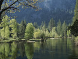 Spring View of the Merced River Photographic Print by Marc Moritsch