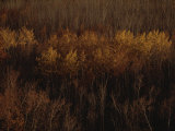 An Aerial View of a Stand of Trees in Autumn Colors Photographic Print by Raymond Gehman
