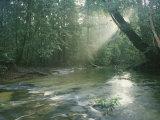 Sunlight Streams Through a Rainforest onto a Rushing Stream Fotografisk tryk af Tim Laman