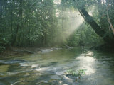 Sunlight Streams Through a Rainforest onto a Rushing Stream Photographic Print by Tim Laman