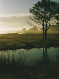 Scenic View of the Misty Marsh Landscape Photographic Print by Al Petteway